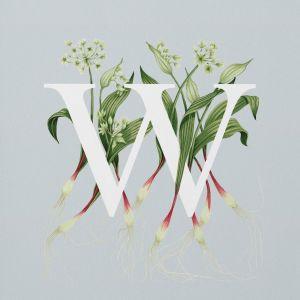 charlotte day print Wild Garlic