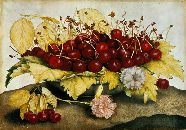 giovanna garzoni cherries