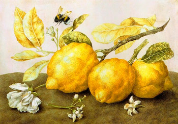 giovanna garzoni lemons and bee